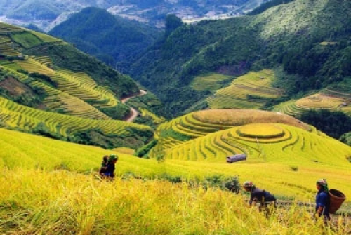 Sapa tour 3 days 2 nights by Bus (1 night in Ta Van village, 1 night in hotel)